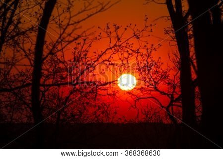 Orange Glow Sunset With Tree Branches. Background
