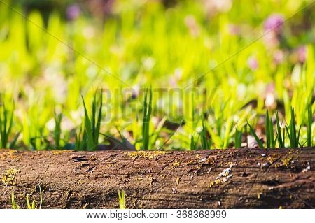 Empty Tree Trunk For Display Montags. Green Spring Soft Background