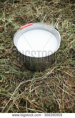 Metal Bucket With Fresh Foaming Milk On The Hay. Pail With Milk. Dairy Farm. Milk Farm.