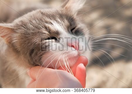 Hand Petting And Stroking A White And Grey Cat. Feline Happy Squinting Eyes Closed. Taking Care Of A