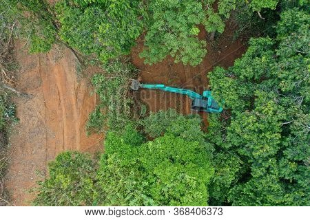 Deforestation. Logging. Excavator fells trees in rainforest to make way for oil palm plantations