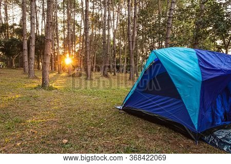 Blue Camping Tents In Nature Background With Sunset And Light Flare  In  Forest Pine Tree At Thung S