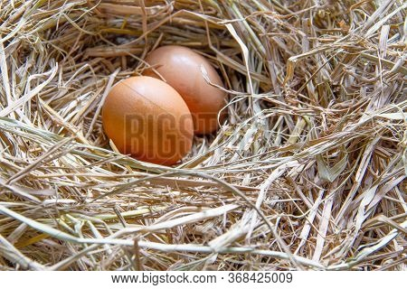 The Hen's Egg Is Made Of Straw. There Are Hen's Eggs In The Nest.