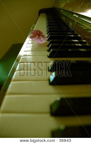 Flower On A Piano