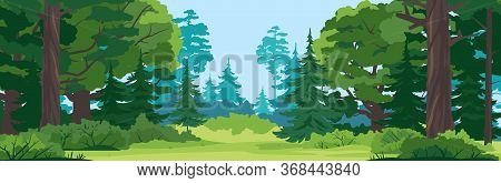 Green Glade With Grass In Mixed Forest On Summer Sunny Day, Spruce Trees And Bushes In Front View, P
