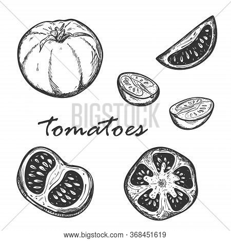 Sketch Of Tomatoes In Different Types. Set With Whole, Cut Lengthwise And Across Tomatoes. Segments