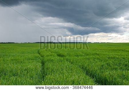 The Tractor Drove Through The Field For Processing Wheat From Pests