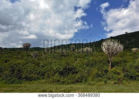 Beautiful Landscape Of Kenya. On The Hillside Grows Many Shrubs. Among Them Are Unusual Plants, Ende