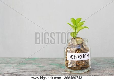 Coins And Green Sprout In Glass Jar With Inscription Donation On Gray Background.