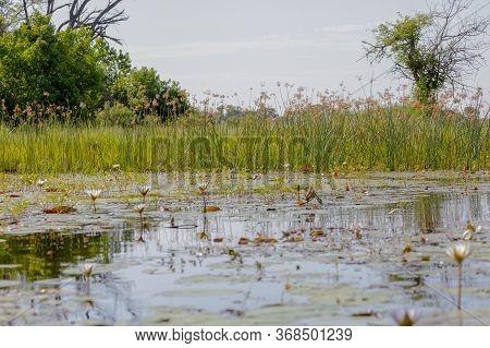 Scene Of The Okavango Delta In Botswana From A Small Boat.