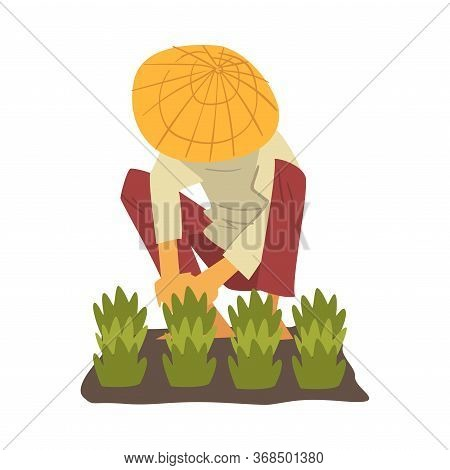 Asian Farmer In Straw Conical Hat Caring For Plants, Peasants Character Planting Rice On Field Carto