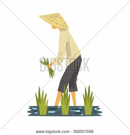 Asian Farmer In Straw Conical Hat Harvesting Rice In Paddy Field, Male Peasants Character Working On