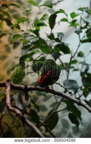 The Green Colorful Bird (vernal Hanging Parrot)