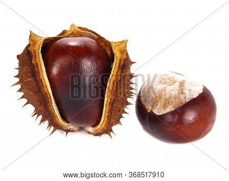 Dry Ripe Chestnut And Chestnut Pod Isolated On White