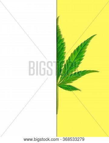 Cannabis Leaf On Yellow Background Under White
