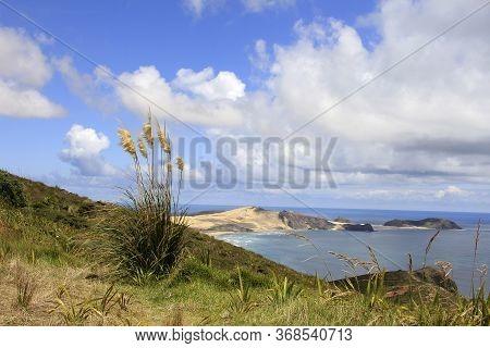Magnificent Ocean Landscape Of New Zealand, Muriwai Gannet
