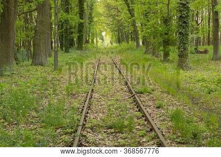 Old Railway Siding.\nrailroad Tracks, Rails Covered With A Layer Of Brown Rust, Green Plants Grow Be