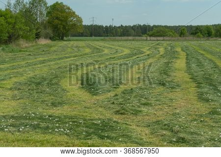 Vast Terrain, Plain. Fields And Meadows. The Grass Was Cut Down In The Meadow During Haymaking. The