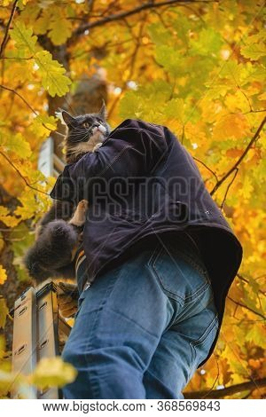 Frightened Cat Descends From The Tree A Man. The Cat Sits On The Shoulder Of A Man Who Saves Him.
