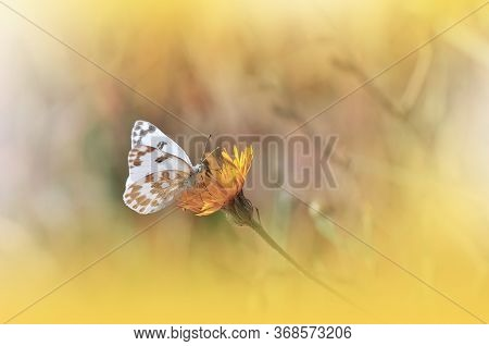 Beautiful Golden Nature Background.Floral Art Design.Macro Photography.Abstract Pastel Landscape with Copy Space.Butterfly and Field.Summer Butterfly on a Yellow Flower.Creative Artistic Wallpaper.Tranquil Scene. Agricultural Meadow.Yellow Color.