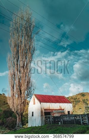 Old Rural Corrugated Iron Building And Stock Yard Railings In Shade And Tall Leafless Birch Tree  Wi