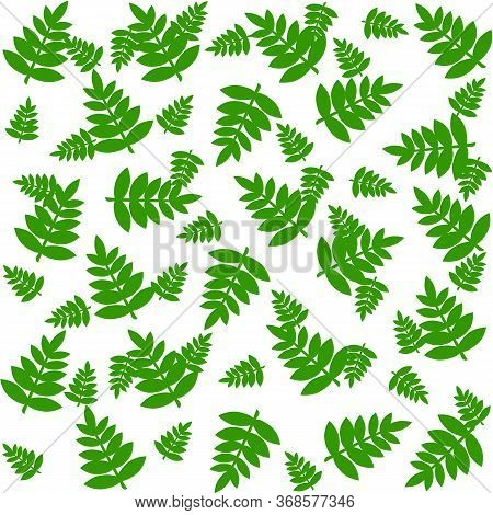 Fern Pattern Seamless In Green Color, Fern Leaves Pattern Isolated On White, Fresh Summer Print For