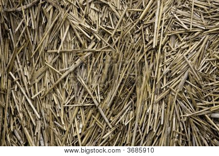 Dried Dune Grass Reeds