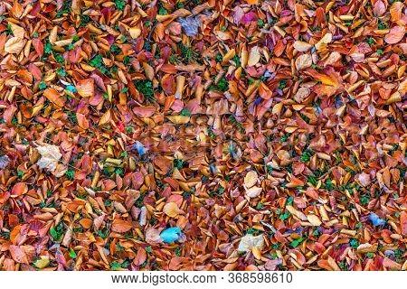 Autumn foliage seamless background. Fallen leaves tile.