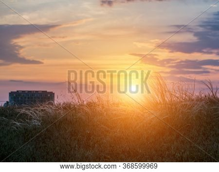 Field With Wild Grasses At Sunset. Selective Focus. Summer Landscape, Rural Nature. Feather Penniset