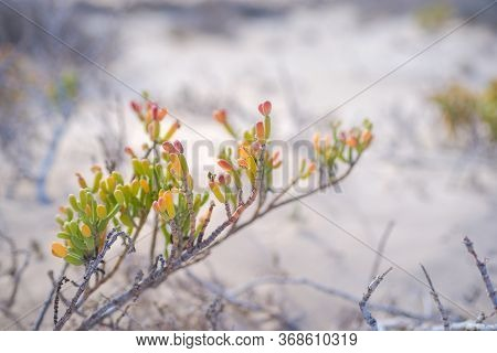 Plant In The Desert - Conceptual Photo For Growth In Adverse Conditions