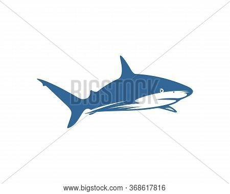 Shark Logo Vector Design Template, Silhouette Shark Logo, Illustration