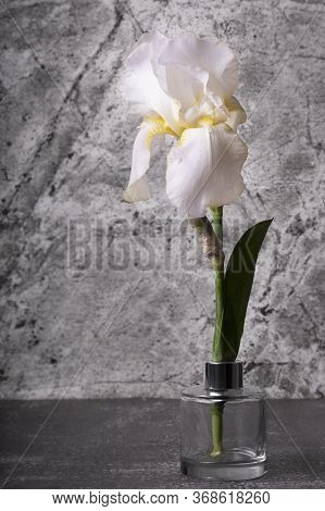 White Iris Flower On A Grey Background