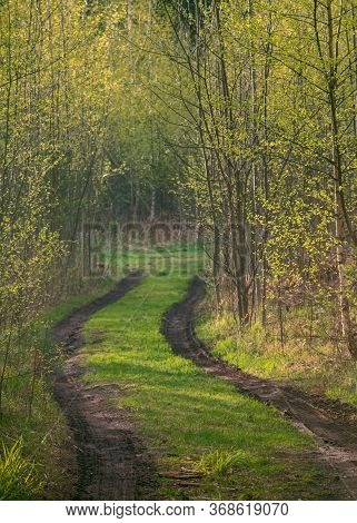 Forest Path With Spring Mud Among Trees With Young Foliage, Toned