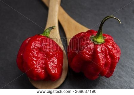 Hottest Pepper In The World. Trinidad Scorpion Butch, Thousands Of Times More Spicy Than Havana. On