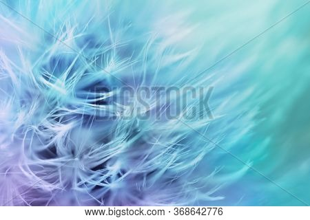 Soft Abstract Gradient Color Background , Abstract Dandelion