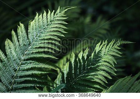 Natural Floral Fern Background