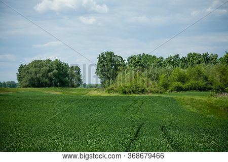 Beautiful Shot Of Green Grass Field With Trees