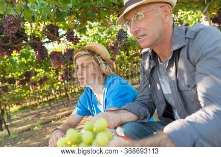Winegrowers In Straw Hats Relaxing In Garden At Sunny Day. Father And Son Gardeners Sitting In Vine