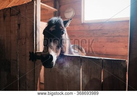 Brown Horse In The Stable. Horse In His Aviary. Stable With Animals
