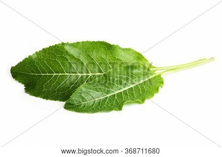 Horseradish Leaves Isolated On White Background As Package Design Element