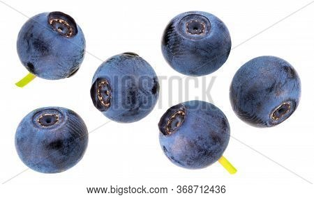 Bilberries Isolated On White Background As Package Design Element