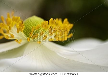 Close Up Image Of Daisy With A Yellow Pistil