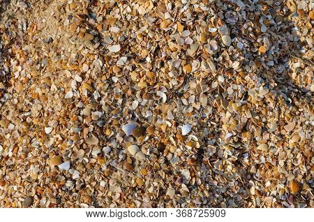 Abstract Golden Sand With Seashells Background. Design For Interiors. Tropical Sand Background Close
