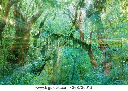 Zoom Blur Ghostly Effect In New Zealand Forest Spooky Old Trees And Ferns And Mosses