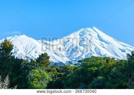Stunning White Snow Capped Mount Egmont Above Evergreen Native Bush And Below Clear Blue Sky,  In Ta