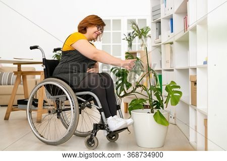 Positive young woman with paralyzed legs sitting in wheelchair and watering domestic plants in living room