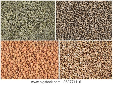 Set Of Food Background: Coriander, Lentil, Brown Rice And Sugar.
