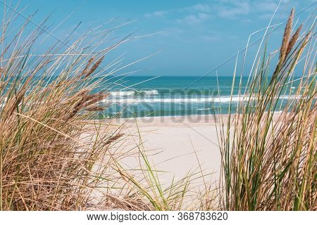 Beautiful Sand Beach With Dry And Green Grass, Reeds, Stalks Blowing In The Wind, Blue Sea With Wave