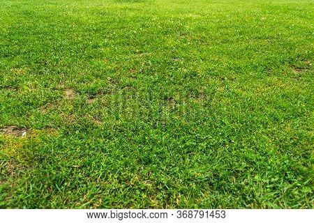 Green Grass Background Texture. Natural Green Background.