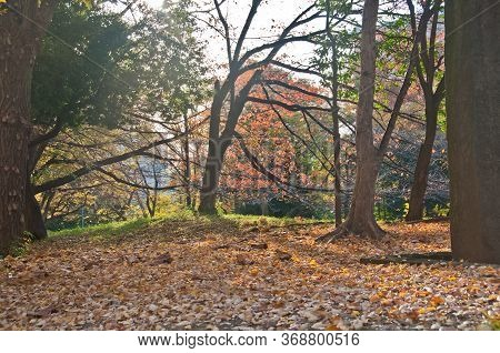 Calm Serenity Blissful Foliage Scene Of Empty Park In Late Autumn Morning In Tokyo Japan